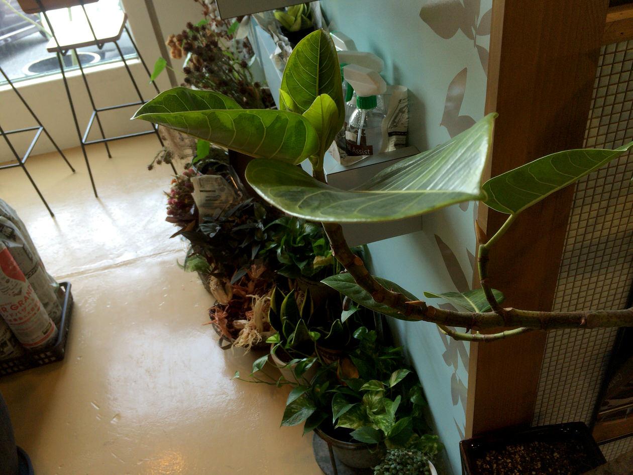 植物がたくさん置かれている